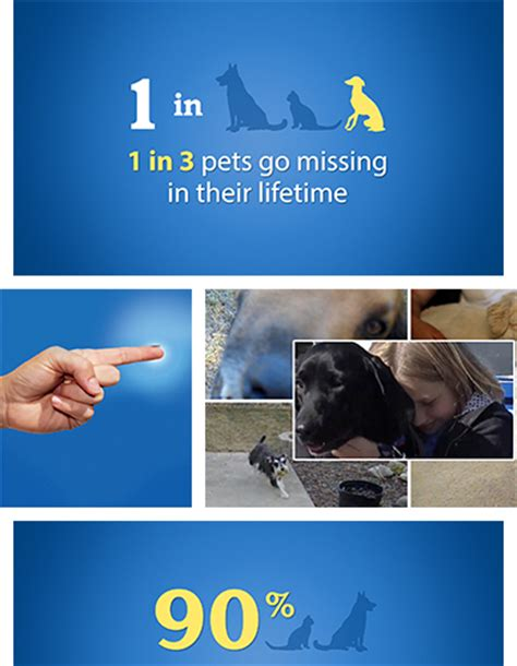 support microchipping for pets homeagain pet microchip