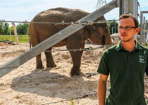 Blog Project Elephant Blackpool Zoo
