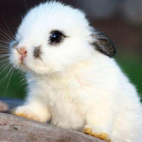 imagenes bonitas de animales conejito blanco animales muy graciosos las maravillas