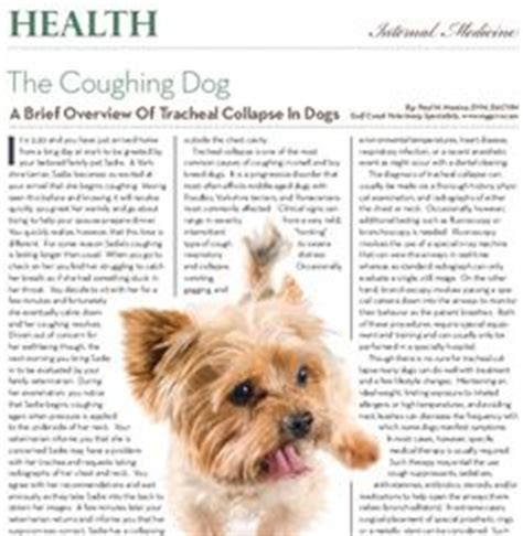 articles on dogs 1000 images about houston pet talk articles on pets articles and