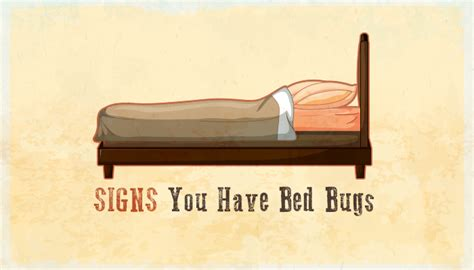 signs you have bed bugs beware bed bug season is here infographic