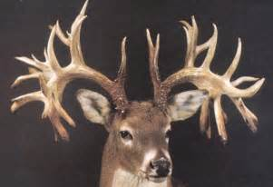 hysteria over anabolic steroids for antler growth in texas