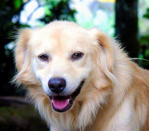 boy dog names  fido