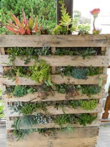 Vertical Succulent Garden Pallet Succulent Wall Upright And Growing Crafts Diy