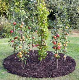 fruit trees for small backyards how to grow apples and pears in cordons gardens pinterest pear and apples