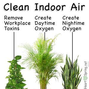 air filter plants medical plants indoor plants house