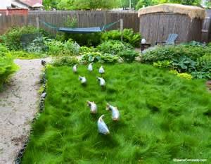 Beautiful Raised Garden Beds - no mow grass update and fish in the garden shawna coronado