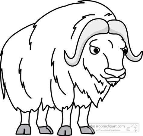 Musk Ox Coloring Pages Ox Coloring Page
