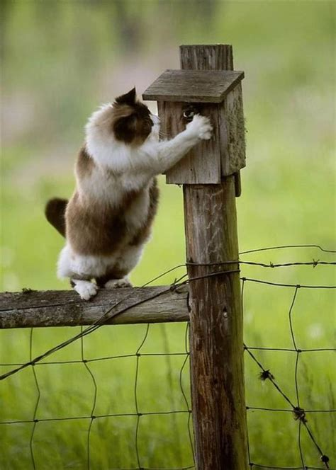 house cat trying to catch a bird in a birdhouse on a fence