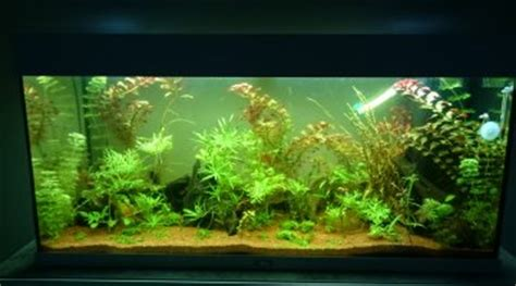 Lu Neon Aquascape avis substrat jbl aquabasis plus