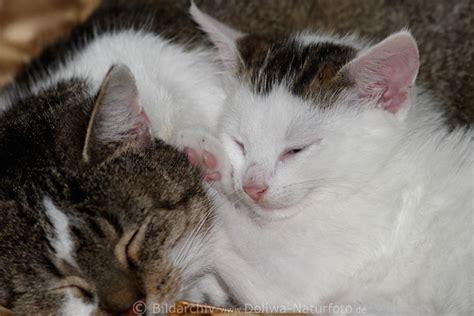 bettdecke mit foto katzenschlaf foto s 252 sses tierbaby mit mutter niedlich