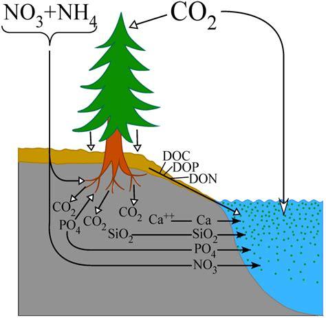 water  full text inorganic nitrogen deposition   impacts  np ratios  lake