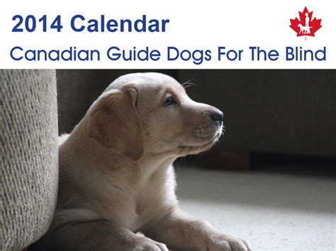 guiding for the blind cards guide dogs cards 2014