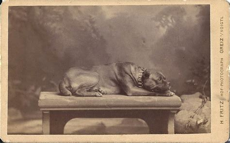 dog breeding bench 10dance historical perspectives 10dance this forum is brought to you by the