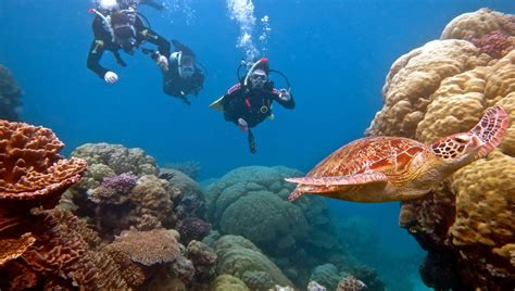 great barrier reef dive trips port douglas scuba diving trips best outer great barrier