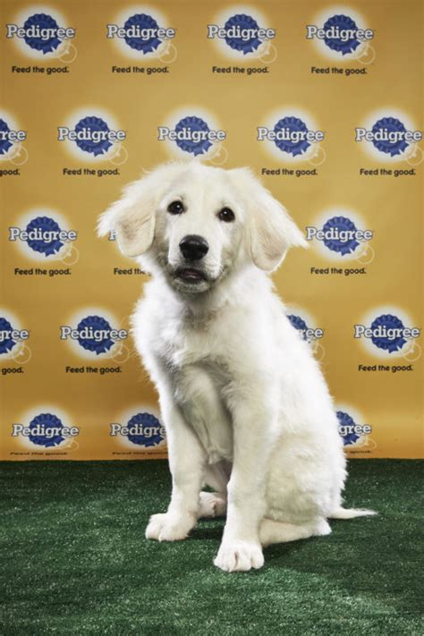 puppy bowl adoptions puppy bowl xiv here we come big fluffy rescue