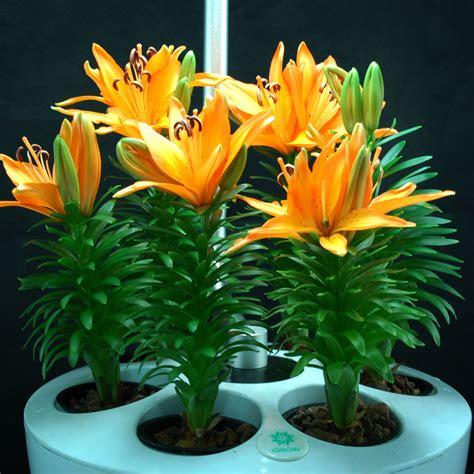 pflanzen set garten hydrokultur pflanzen grow set indoor garten anbau