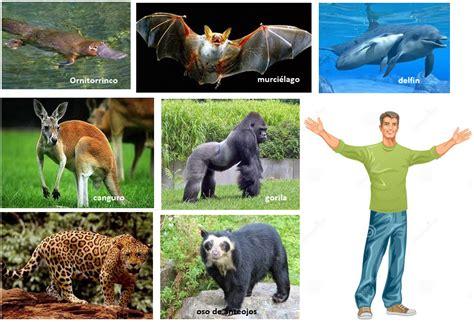 imagenes animales con pelo los animales y sus caracteristicas banco de preguntas de