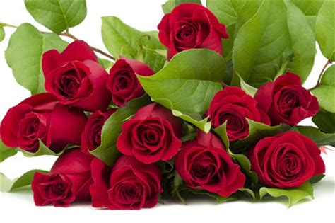 imagenes de rosas rojas para una madre banco de im 193 genes 161 feliz d 237 a de las madres im 225 genes de