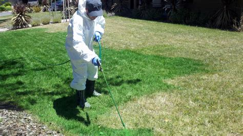 spray painting grass green california s severe drought means more business for grass