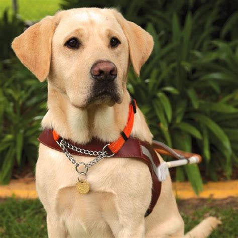 dogs walkthrough guide dogs