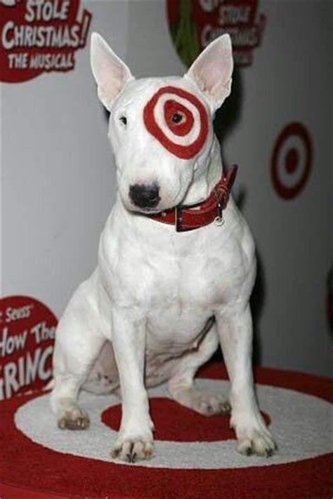 bullseye breed quot bullseye quot target bull terrier bully page