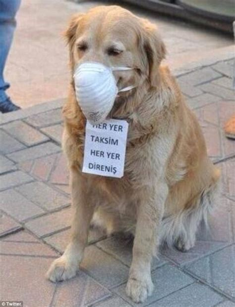 turkey necks for dogs now dogs are being tear gassed heartbreaking images of