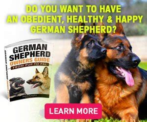 how much should i feed my german shepherd puppy vet recommended feeding guidelines for your german shepherd shepped