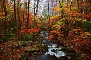 smoky mountains fall colors fantastic fall season in the great smoky mountains 38 pics