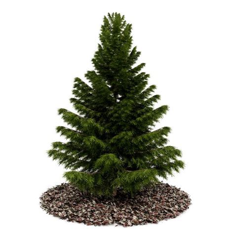 conifer tree 3d model cgtrader com