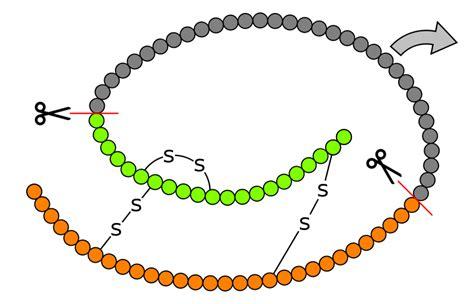 b protein biologicals biological proteins biology visionlearning