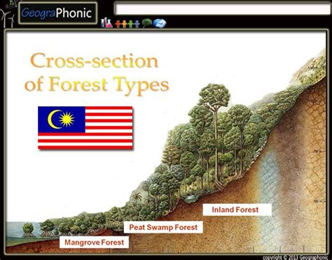 cross section types cross section of forest types in malaysia