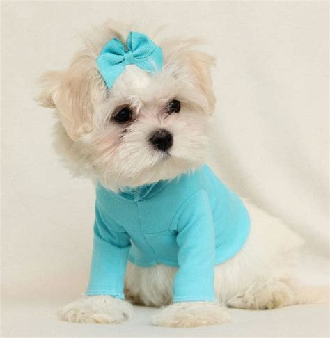 puppies clothes 17 best images about pc clothes on for dogs coupon codes and pajamas