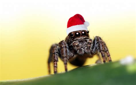 how to get rid of spiders from christmas tree hat spider wallpaper 1920x1200 resolution wallpaper best wallpaper net