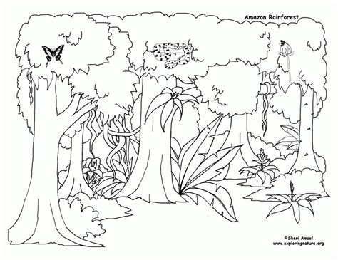 rainforest leaves coloring page rain forest trees coloring page coloring home