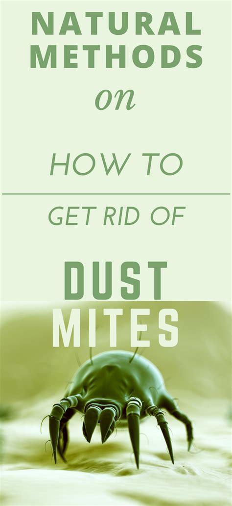how to get rid of dust mites in bed how to get rid of dust mites in carpet naturally floor