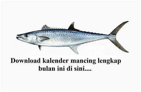 Gps Mancing cara dan umpan mancing ikan mahseer spot mancing