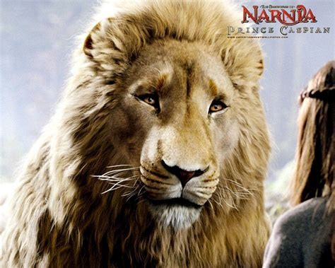 aslan the from narnia narnia aslan wallpapers wallpaper cave
