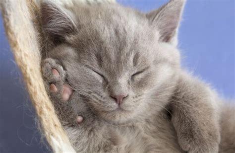 katze zittert beim schlafen m 252 de katzen nur noch ein bisschen weiterschlafen