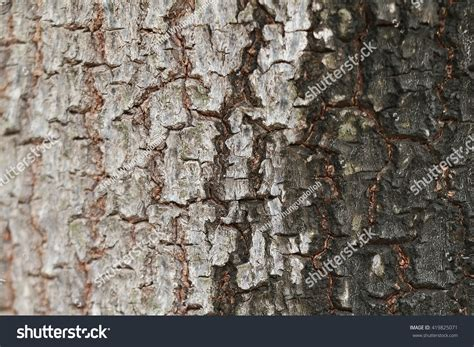 bark color tree bark two colors stock photo 419825071