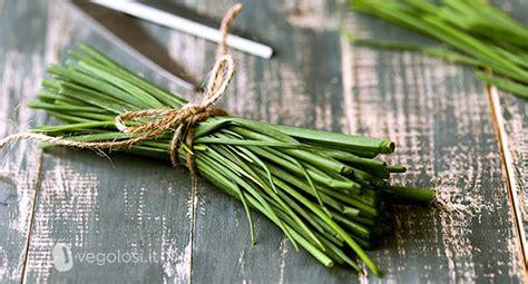 erba cipollina in vaso erba cipollina ricette coltivazione propriet 224