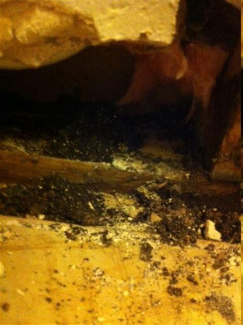 dirt  wall  carpenter ants doityourselfcom
