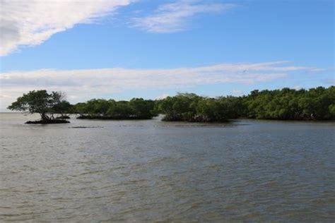 ten thousand islands boat tour ten thousand islands picture of everglades national park