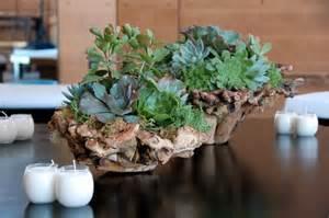 Indoor Outdoor Cactus » Home Design 2017
