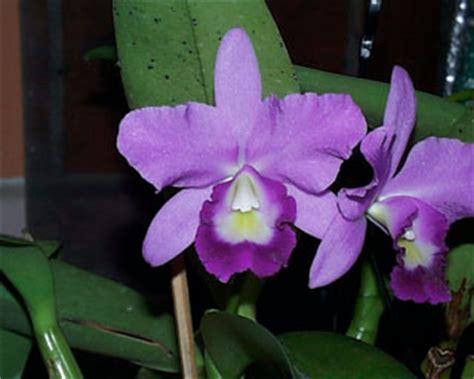 common plants in a tropical rainforest hodnettbiomeproject tropical rainforest