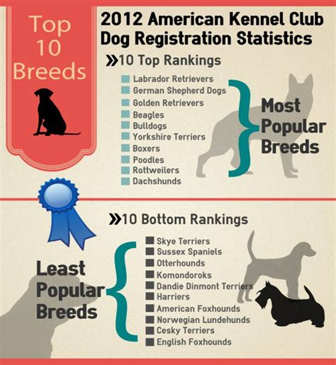 what is the most popular breed top 10 most and least popular breeds american kennel club