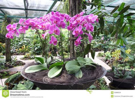 Cascading Indoor Plants potted pink orchid garden arrangement in singapore stock