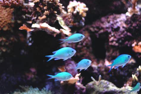 schlafen fische schlafen fische im aquarium antworten bei bachflohkrebse de