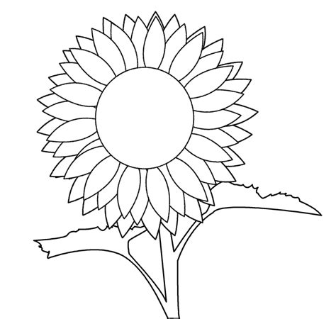 sunflower line art cliparts co