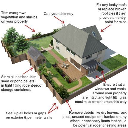 how to keep mice out of your house 1000 images about pest control on pinterest mosquito trap popular and mice repellent